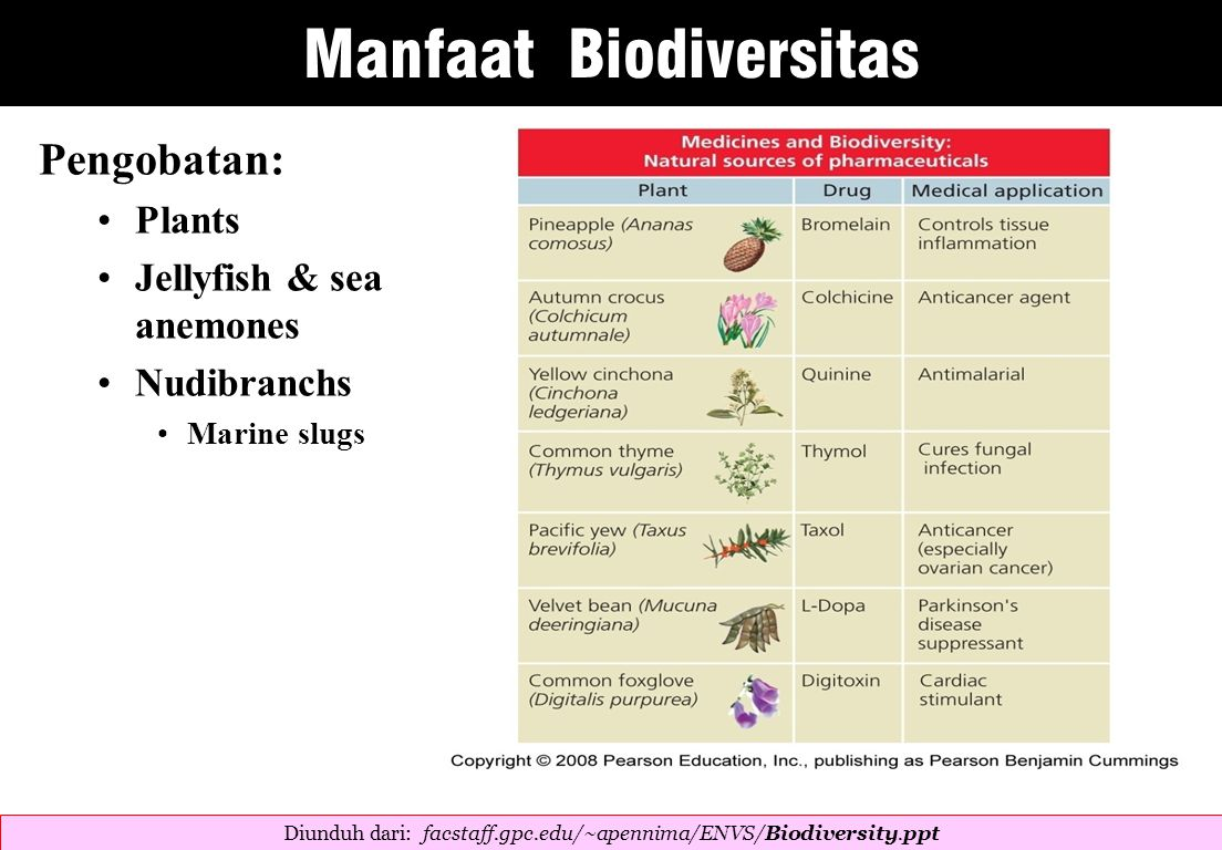 Pengobatan: Plants Jellyfish & sea anemones Nudibranchs Marine slugs Diunduh dari: facstaff.gpc.edu/~apennima/ENVS/Biodiversity.ppt  Manfaat Biodiversitas