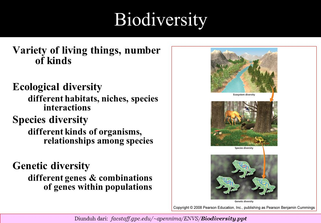 Biodiversity Variety of living things, number of kinds Ecological diversity different habitats, niches, species interactions Species diversity different kinds of organisms, relationships among species Genetic diversity different genes & combinations of genes within populations Diunduh dari: facstaff.gpc.edu/~apennima/ENVS/Biodiversity.ppt ‎