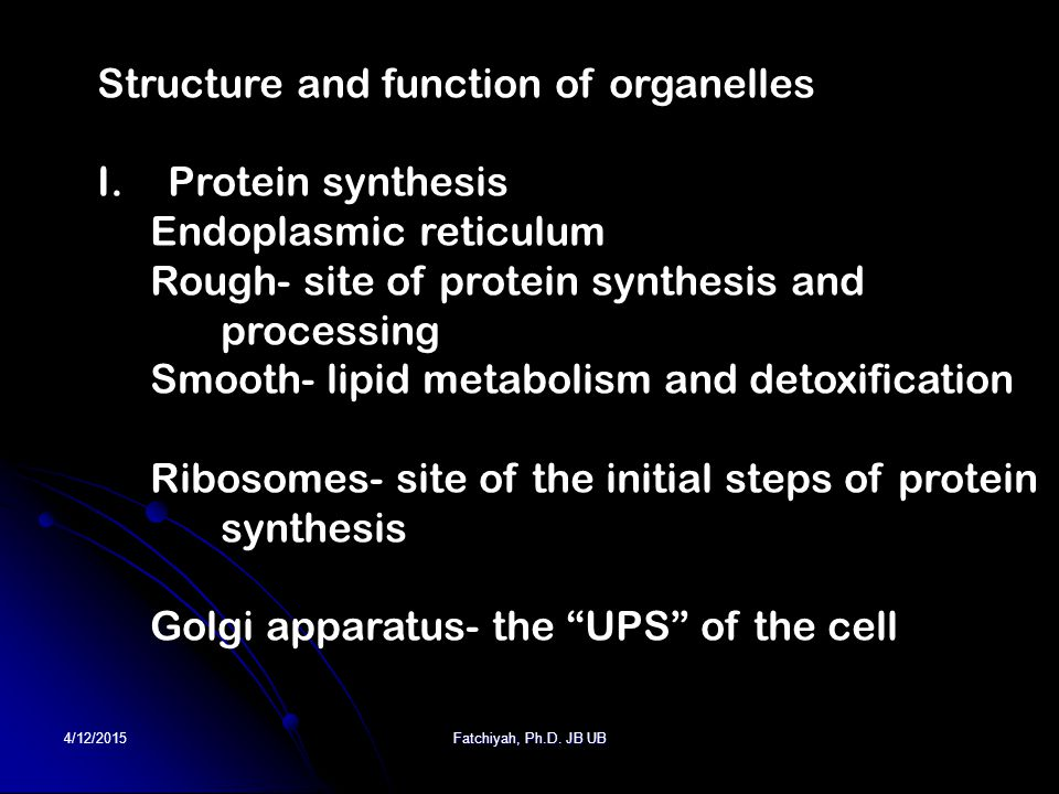 4/12/2015Fatchiyah, Ph.D. JB UB Structure and function of organelles I.Protein synthesis Endoplasmic reticulum Rough- site of protein synthesis and pr