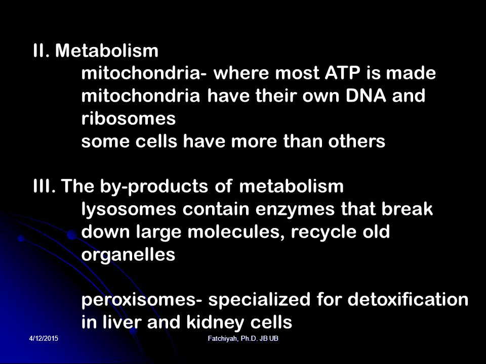 4/12/2015Fatchiyah, Ph.D. JB UB II. Metabolism mitochondria- where most ATP is made mitochondria have their own DNA and ribosomes some cells have more