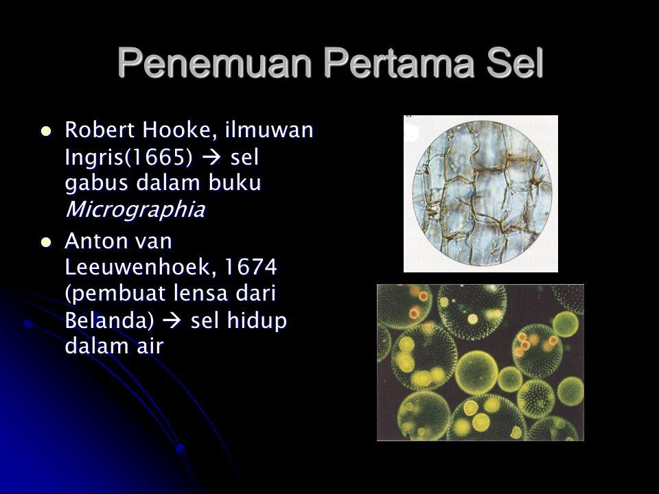 Penemuan Pertama Sel Robert Hooke, ilmuwan Ingris(1665)  sel gabus dalam buku Micrographia Robert Hooke, ilmuwan Ingris(1665)  sel gabus dalam buku