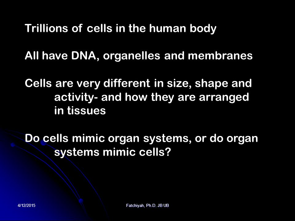 4/12/2015Fatchiyah, Ph.D. JB UB Trillions of cells in the human body All have DNA, organelles and membranes Cells are very different in size, shape an