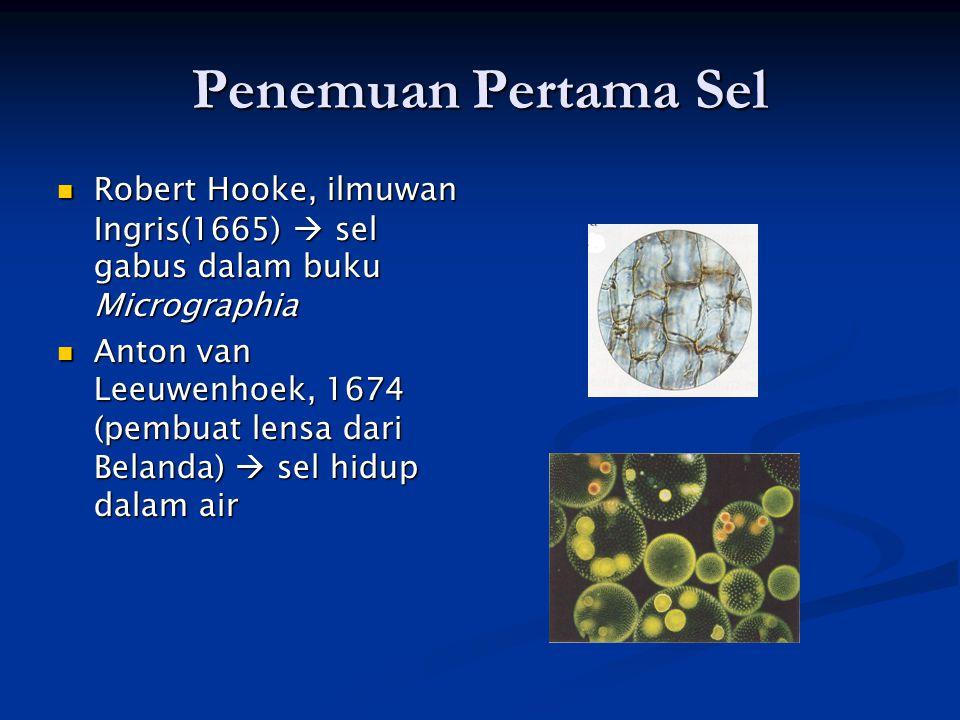 Penemu Sel Mathias Schleiden (ahli tumbuhan dari Jerman), 1838  semua tanaman terdiri atas sel Mathias Schleiden (ahli tumbuhan dari Jerman), 1838  semua tanaman terdiri atas sel Theodor Schwann (zoologis dari Jerman), 1839  sel merupakan unit struktur terkecil dari makhluk hidup Theodor Schwann (zoologis dari Jerman), 1839  sel merupakan unit struktur terkecil dari makhluk hidup Rudolp Virchow (Jerman), 1855  sel berasal dari sel yang sudah ada (TEORI SEL) Rudolp Virchow (Jerman), 1855  sel berasal dari sel yang sudah ada (TEORI SEL)