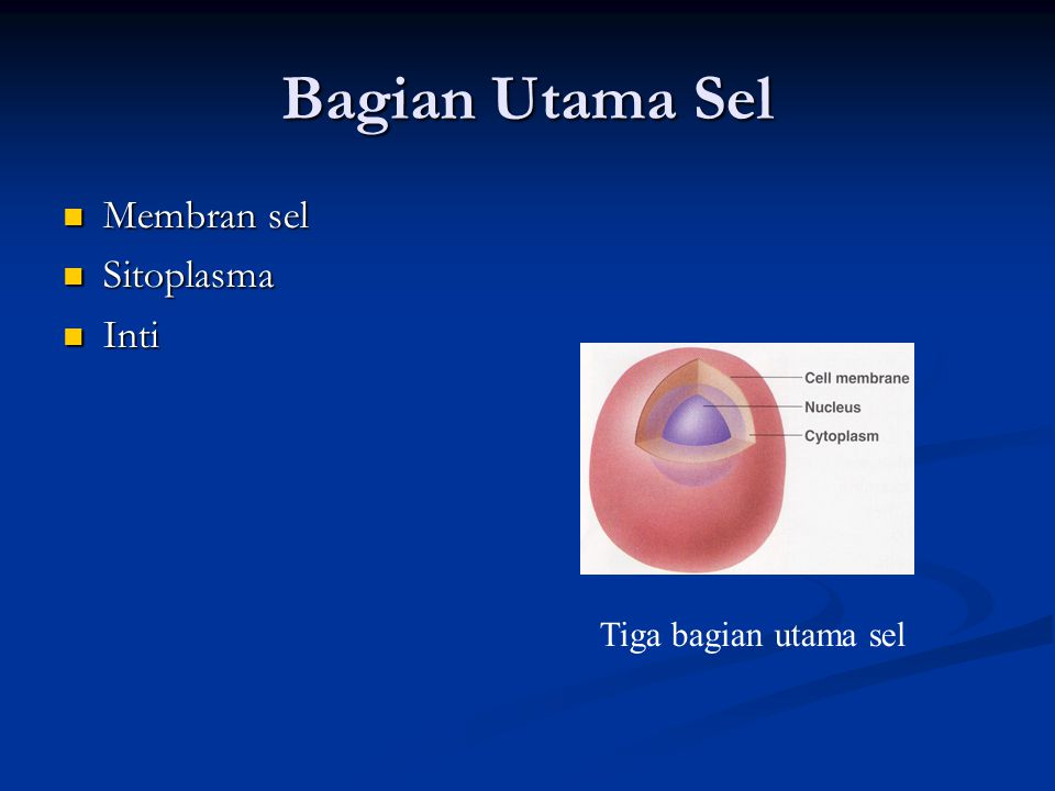 Bagian Utama Sel Membran sel Membran sel Sitoplasma Sitoplasma Inti Inti Tiga bagian utama sel