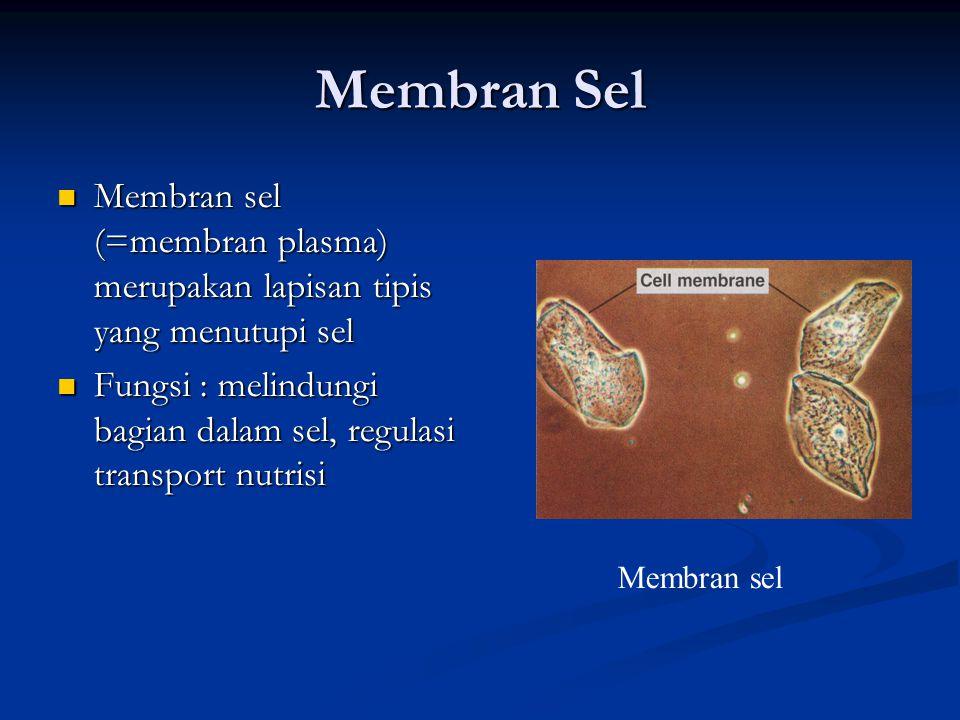 Sitoplasma Sitoplasma : bagian dalam sel, selain nukleus Sitoplasma : bagian dalam sel, selain nukleus Sitosol : bagian di luar organel sel Sitosol : bagian di luar organel sel