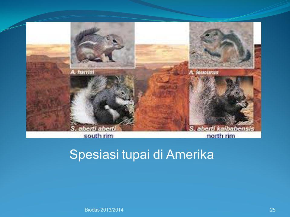 Spesiasi tupai di Amerika Biodas 2013/201425
