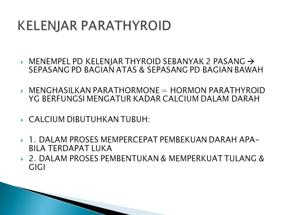  MENEMPEL PD KELENJAR THYROID SEBANYAK 2 PASANG  SEPASANG PD BAGIAN ATAS & SEPASANG PD BAGIAN BAWAH  MENGHASILKAN PARATHORMONE = HORMON PARATHYROID
