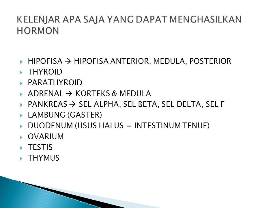  TERDIRI DARI HIPOFISA ANTERIOR (DEPAN), MEDULA (TENGAH) & POSTERIOR (BELAKANG)  ANTERIOR & MEDULA  ADENOHIPOFISA  POSTERIOR  NEUROHIPOFISA  ADA SINYAL SYARAF BARU DISEKRESIKAN  KELENJAR HIPOFISA  MASTER GLAND  KARENA DPT MENGHASILKAN HORMON & HORMON YANG DIHASILKAN DAPAT MERANGSANG KELENJAR LAIN UNTUK MENGHASILKAN HORMON LAIN  hipofisa anterior  TSH = tyrosomatotropic hormone  merangsang kelenjar thyroid  untuk menghasilkan thyroksin  thyroksin digunakan untuk metabolisme tubuh (kh, protein, lipid)  berarti jln menuju hipofisa anterior akan terhambat dst