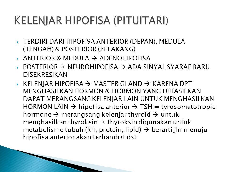  TERDIRI DARI HIPOFISA ANTERIOR (DEPAN), MEDULA (TENGAH) & POSTERIOR (BELAKANG)  ANTERIOR & MEDULA  ADENOHIPOFISA  POSTERIOR  NEUROHIPOFISA  ADA
