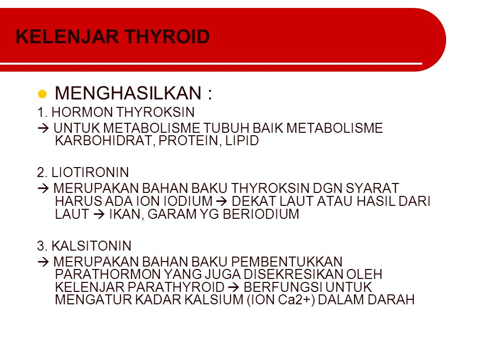 KELENJAR THYROID MENGHASILKAN : 1. HORMON THYROKSIN  UNTUK METABOLISME TUBUH BAIK METABOLISME KARBOHIDRAT, PROTEIN, LIPID 2. LIOTIRONIN  MERUPAKAN B