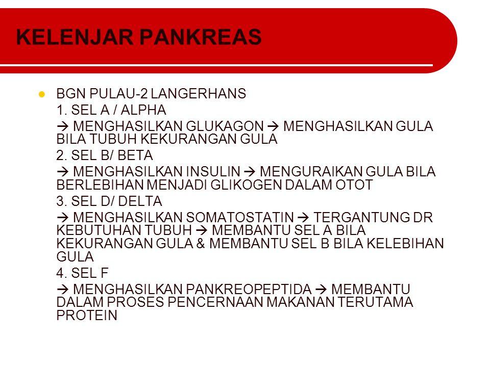 KELENJAR PANKREAS BGN PULAU-2 LANGERHANS 1. SEL A / ALPHA  MENGHASILKAN GLUKAGON  MENGHASILKAN GULA BILA TUBUH KEKURANGAN GULA 2. SEL B/ BETA  MENG