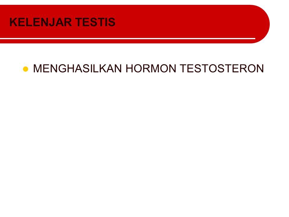 KELENJAR TESTIS MENGHASILKAN HORMON TESTOSTERON