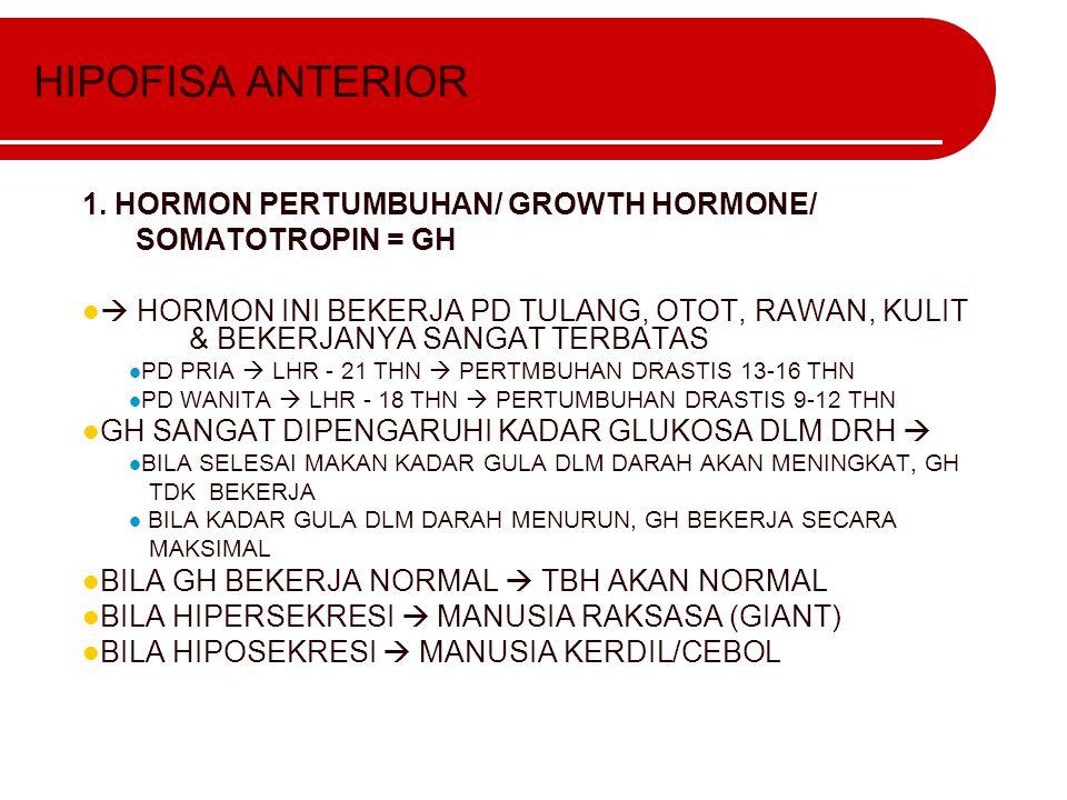 HIPOFISA ANTERIOR 1. HORMON PERTUMBUHAN/ GROWTH HORMONE/ SOMATOTROPIN = GH  HORMON INI BEKERJA PD TULANG, OTOT, RAWAN, KULIT & BEKERJANYA SANGAT TERB