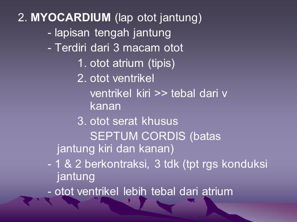 2.MYOCARDIUM (lap otot jantung) - lapisan tengah jantung - Terdiri dari 3 macam otot 1.