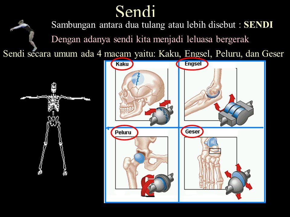 Sendi Sambungan antara dua tulang atau lebih disebut : SENDI Sendi secara umum ada 4 macam yaitu: Kaku, Engsel, Peluru, dan Geser Dengan adanya sendi kita menjadi leluasa bergerak