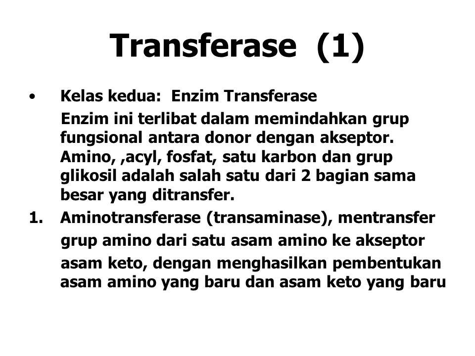 Transferase (1) Kelas kedua: Enzim Transferase Enzim ini terlibat dalam memindahkan grup fungsional antara donor dengan akseptor. Amino,,acyl, fosfat,