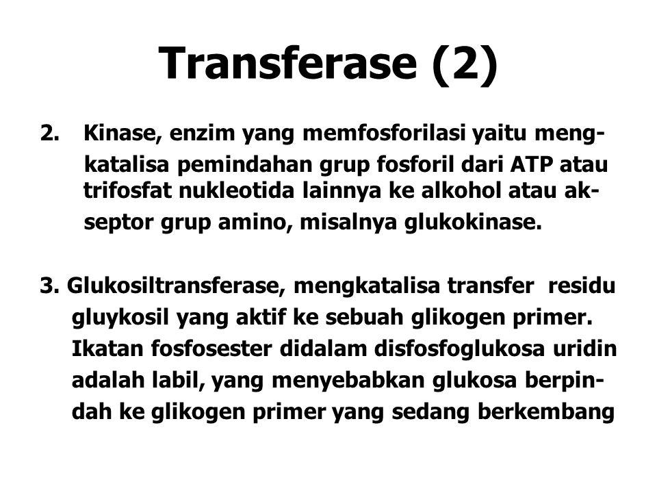 Transferase (2) 2.Kinase, enzim yang memfosforilasi yaitu meng- katalisa pemindahan grup fosforil dari ATP atau trifosfat nukleotida lainnya ke alkohol atau ak- septor grup amino, misalnya glukokinase.
