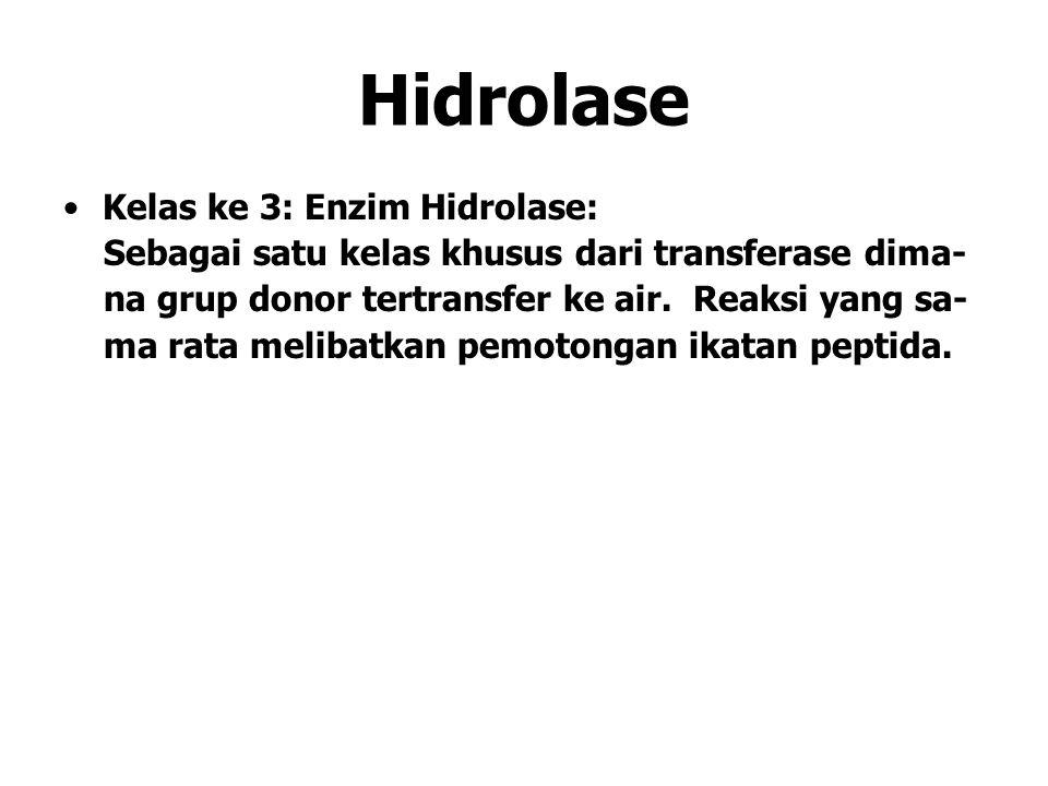 Hidrolase Kelas ke 3: Enzim Hidrolase: Sebagai satu kelas khusus dari transferase dima- na grup donor tertransfer ke air. Reaksi yang sa- ma rata meli