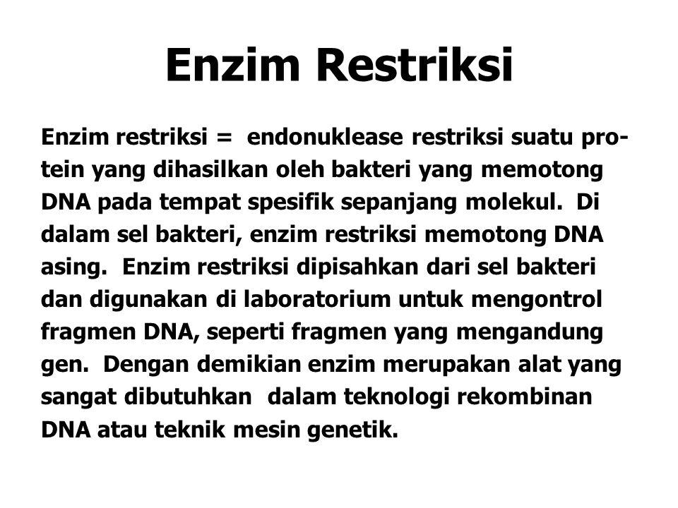 Enzim Restriksi Enzim restriksi = endonuklease restriksi suatu pro- tein yang dihasilkan oleh bakteri yang memotong DNA pada tempat spesifik sepanjang molekul.