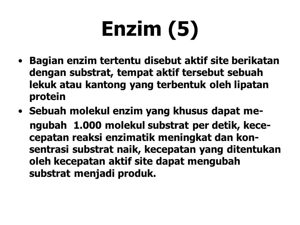 Enzim (5) Bagian enzim tertentu disebut aktif site berikatan dengan substrat, tempat aktif tersebut sebuah lekuk atau kantong yang terbentuk oleh lipa