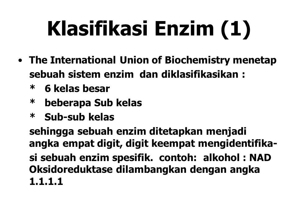 Klasifikasi Enzim (1) The International Union of Biochemistry menetap sebuah sistem enzim dan diklasifikasikan : * 6 kelas besar * beberapa Sub kelas