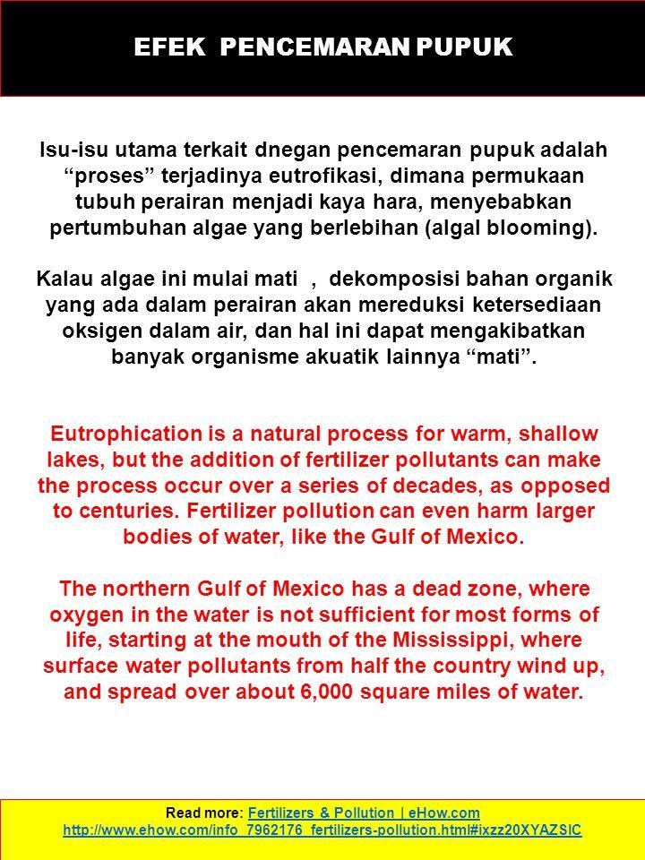 EFEK PENCEMARAN PUPUK Read more: Fertilizers & Pollution | eHow.com http://www.ehow.com/info_7962176_fertilizers-pollution.html#ixzz20XYAZSlCFertilizers & Pollution | eHow.com http://www.ehow.com/info_7962176_fertilizers-pollution.html#ixzz20XYAZSlC Isu-isu utama terkait dnegan pencemaran pupuk adalah proses terjadinya eutrofikasi, dimana permukaan tubuh perairan menjadi kaya hara, menyebabkan pertumbuhan algae yang berlebihan (algal blooming).