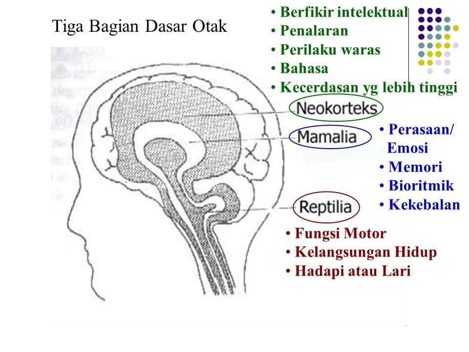 Fungsi Motor Kelangsungan Hidup Hadapi atau Lari Perasaan/ Emosi Memori Bioritmik Kekebalan Berfikir intelektual Penalaran Perilaku waras Bahasa Kecerdasan yg lebih tinggi Tiga Bagian Dasar Otak