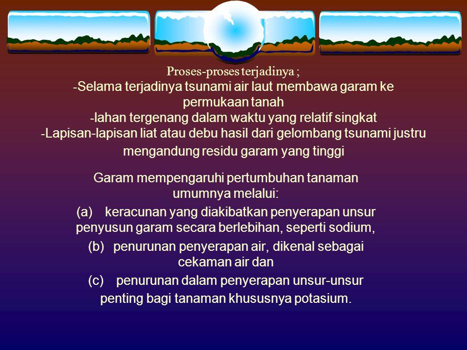 Proses-proses terjadinya ; - Selama terjadinya tsunami air laut membawa garam ke permukaan tanah - lahan tergenang dalam waktu yang relatif singkat -