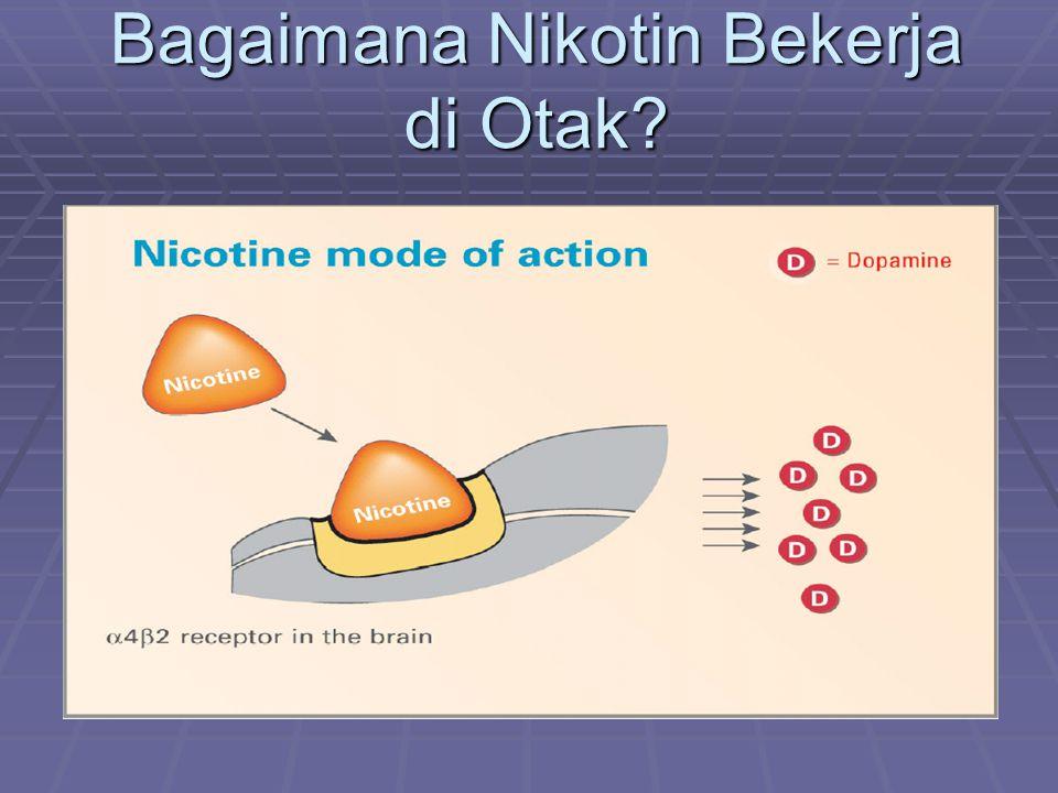 Bagaimana Nikotin Bekerja di Otak?