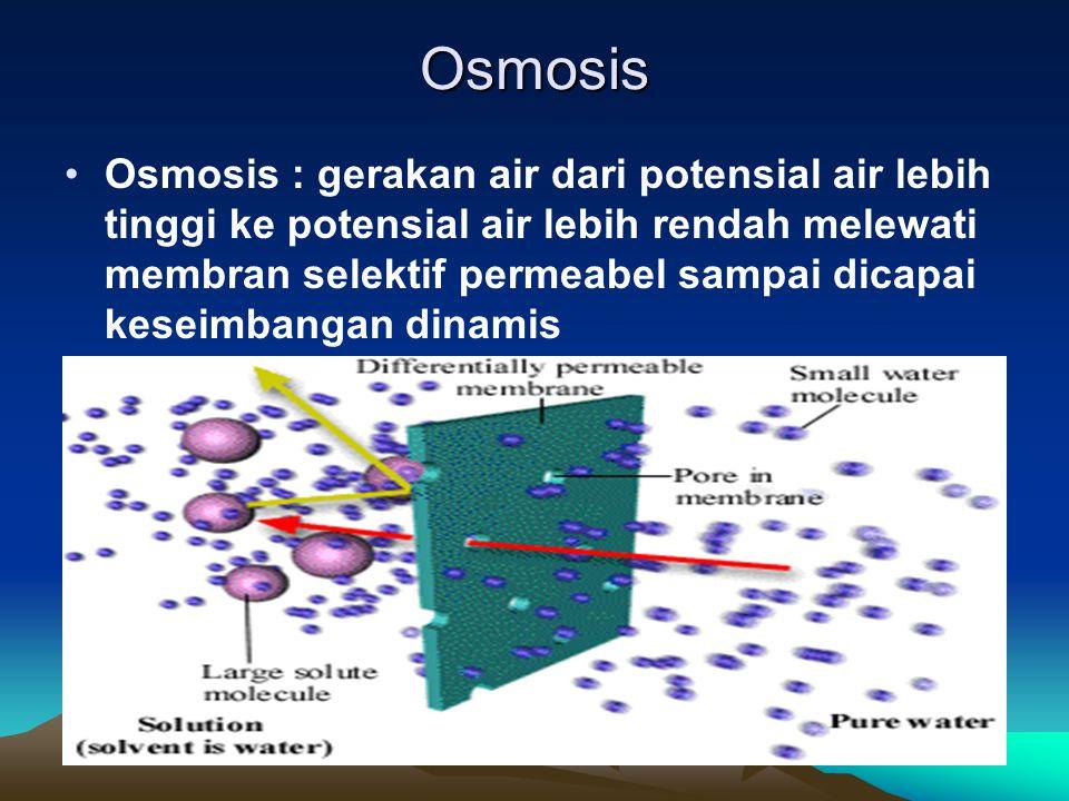 Osmosis Osmosis : gerakan air dari potensial air lebih tinggi ke potensial air lebih rendah melewati membran selektif permeabel sampai dicapai keseimb