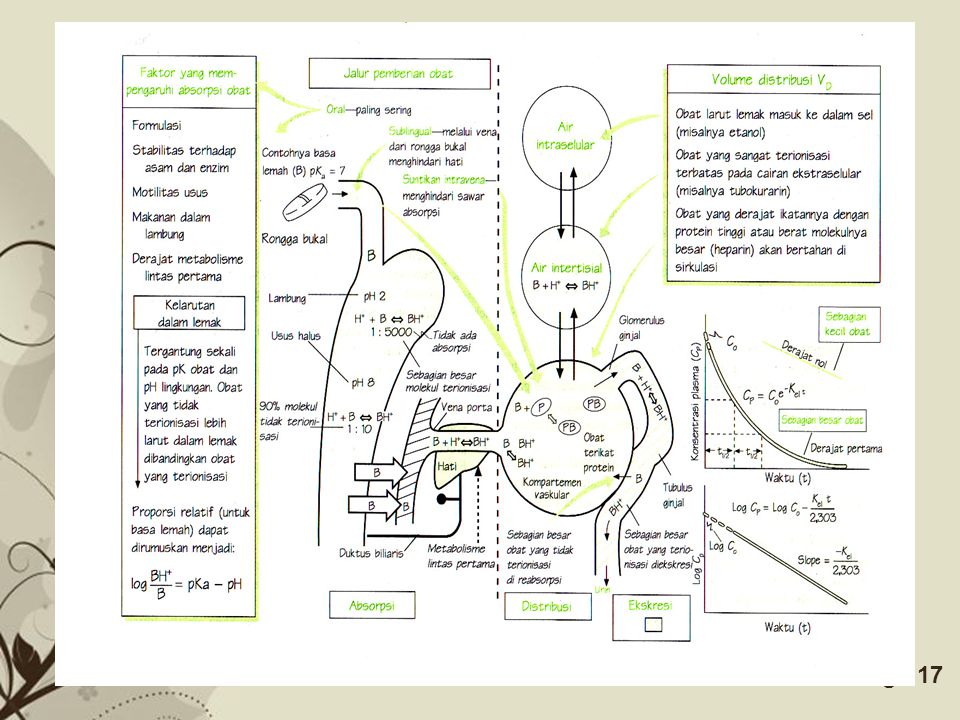 Free Powerpoint TemplatesPage 16 Obat di daerah pemberian Absorbsi Obat dalam plasma Distribusi Obat dalam jaringan Metabolisme Metabolit dalam jaring