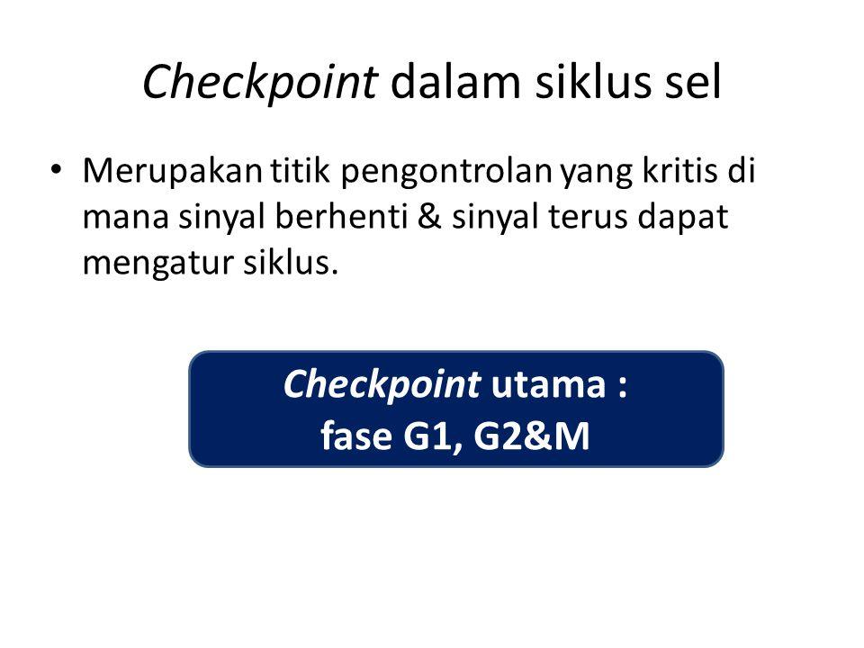 Checkpoint dalam siklus sel Merupakan titik pengontrolan yang kritis di mana sinyal berhenti & sinyal terus dapat mengatur siklus. Checkpoint utama :