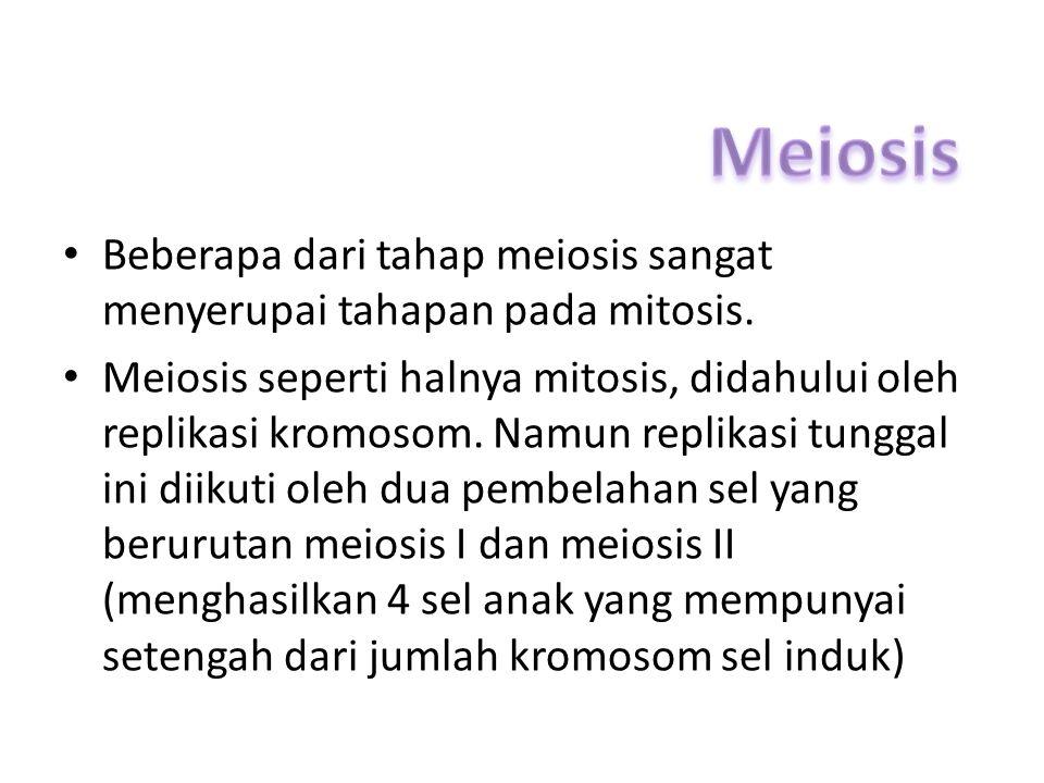 Beberapa dari tahap meiosis sangat menyerupai tahapan pada mitosis. Meiosis seperti halnya mitosis, didahului oleh replikasi kromosom. Namun replikasi