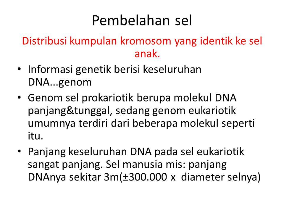 Pembelahan sel Distribusi kumpulan kromosom yang identik ke sel anak. Informasi genetik berisi keseluruhan DNA...genom Genom sel prokariotik berupa mo