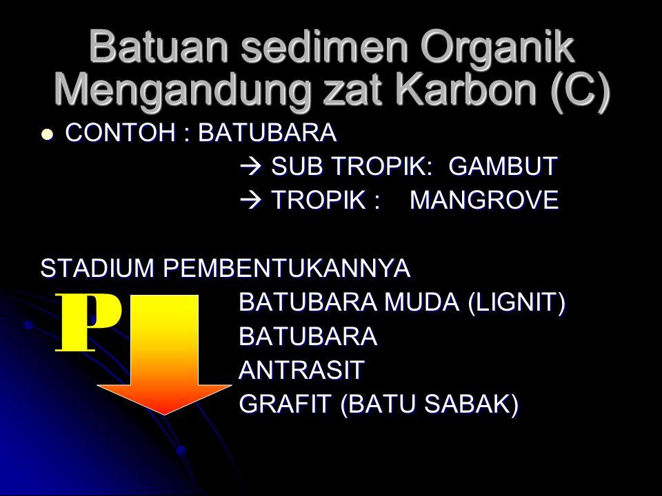 Batuan sedimen Organik Mengandung zat Karbon (C) CONTOH : BATUBARA CONTOH : BATUBARA  SUB TROPIK: GAMBUT  TROPIK : MANGROVE STADIUM PEMBENTUKANNYA B