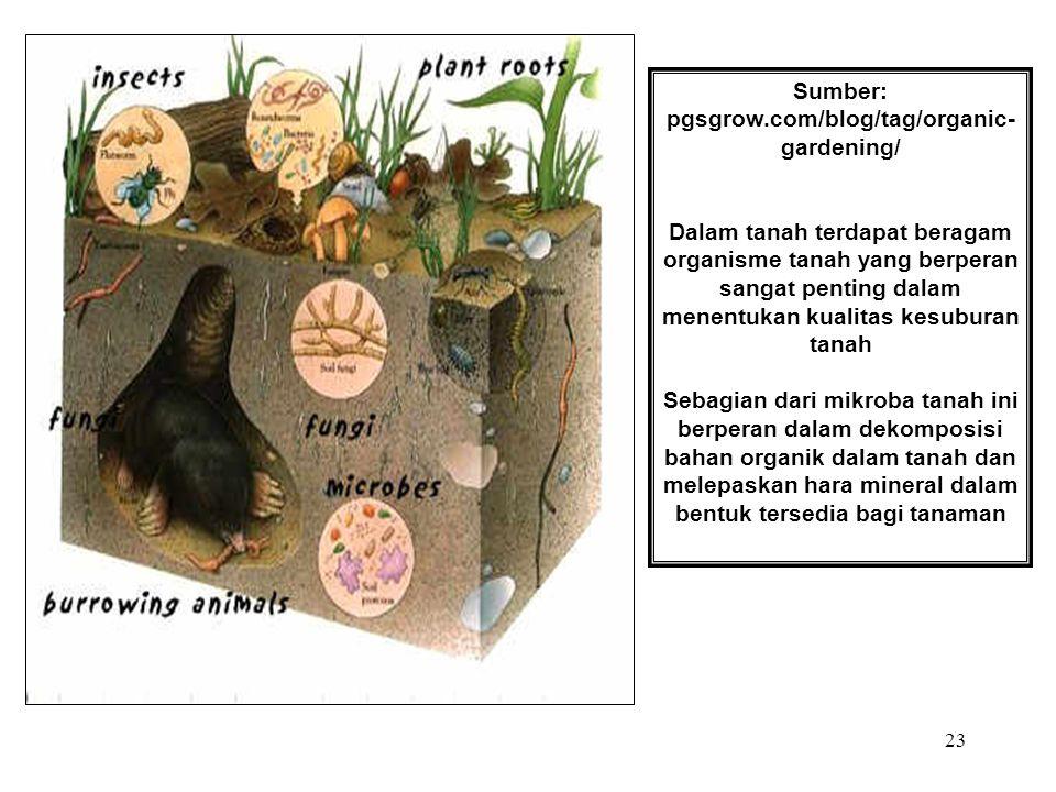 23 Sumber: pgsgrow.com/blog/tag/organic- gardening/ Dalam tanah terdapat beragam organisme tanah yang berperan sangat penting dalam menentukan kualita