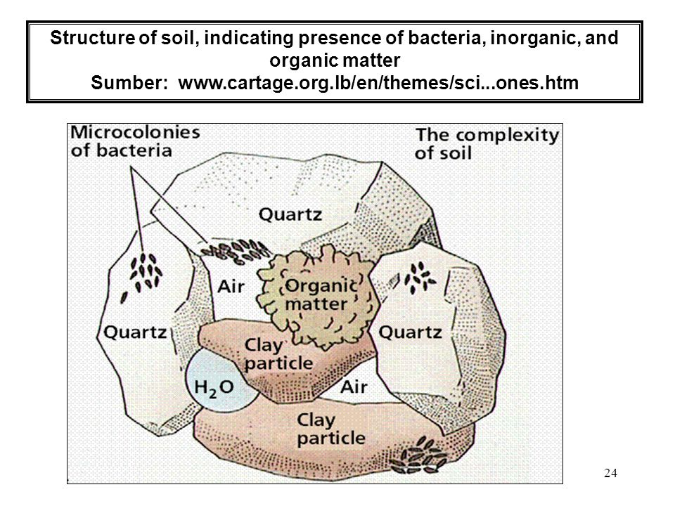24 Structure of soil, indicating presence of bacteria, inorganic, and organic matter Sumber: www.cartage.org.lb/en/themes/sci...ones.htm