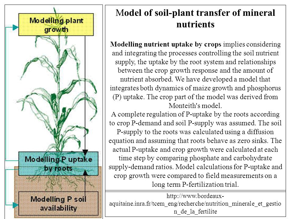 Model of soil-plant transfer of mineral nutrients Modelling nutrient uptake by crops implies considering and integrating the processes controlling the