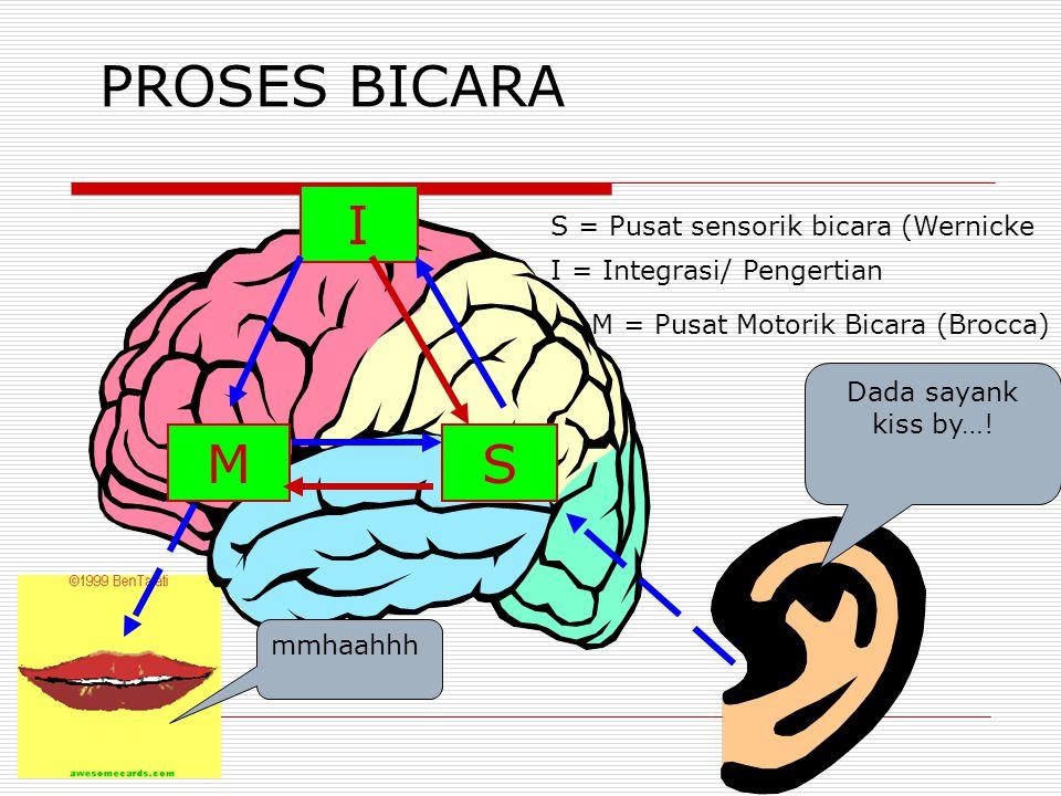 PROSES BICARA I MS S = Pusat sensorik bicara (Wernicke I = Integrasi/ Pengertian M = Pusat Motorik Bicara (Brocca) Dada sayank kiss by…! mmhaahhh