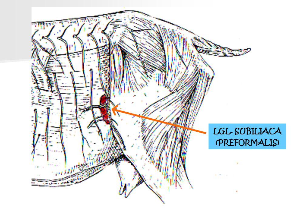 LGL. SUBILIACA (PREFORMALIS)