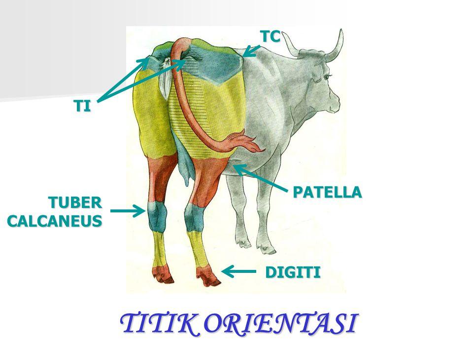 TC TI PATELLA TUBER CALCANEUS TITIK ORIENTASI DIGITI