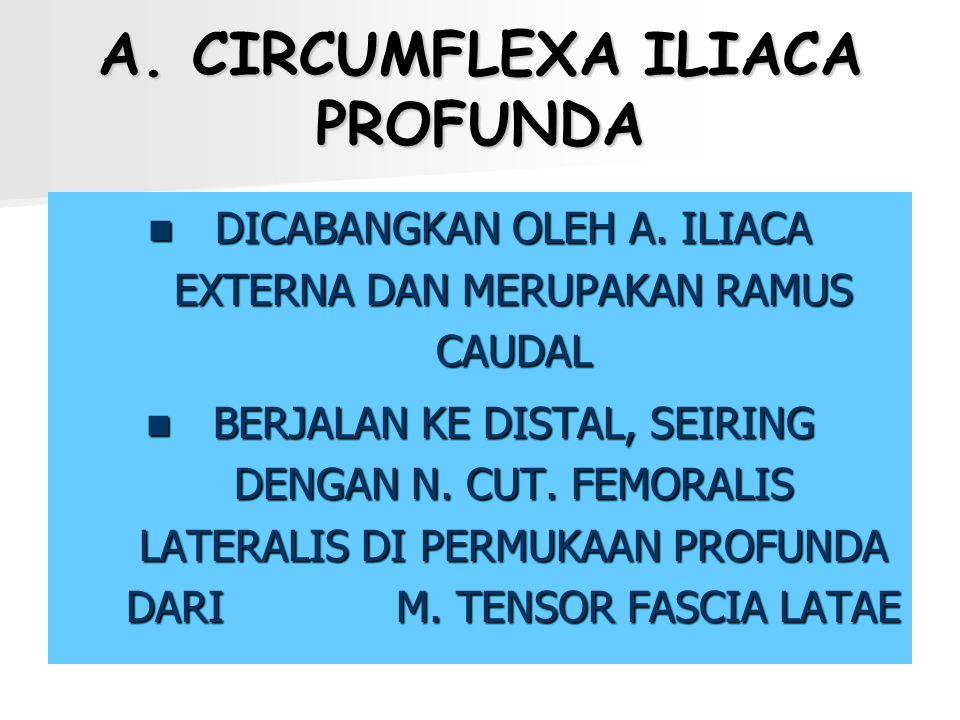 A. CIRCUMFLEXA ILIACA PROFUNDA DICABANGKAN OLEH A. ILIACA EXTERNA DAN MERUPAKAN RAMUS CAUDAL BERJALAN KE DISTAL, SEIRING DENGAN N. CUT. FEMORALIS LATE