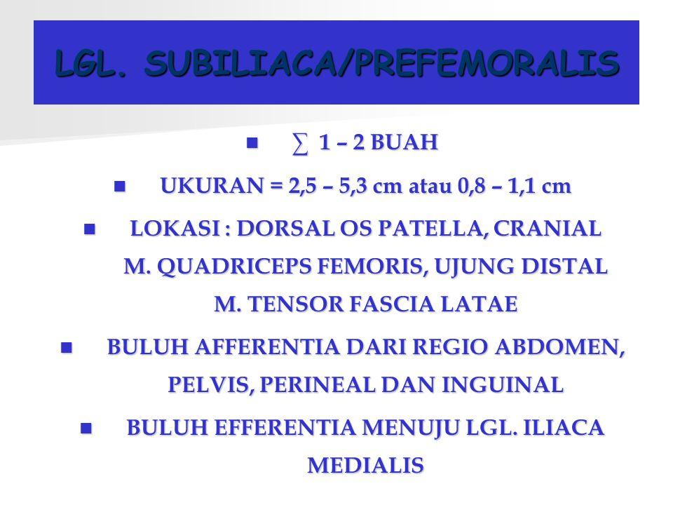 LGL. SUBILIACA/PREFEMORALIS ∑ 1 – 2 BUAH UKURAN = 2,5 – 5,3 cm atau 0,8 – 1,1 cm LOKASI : DORSAL OS PATELLA, CRANIAL M. QUADRICEPS FEMORIS, UJUNG DIST