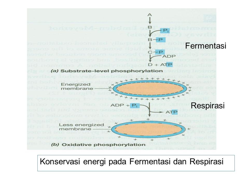 Konservasi energi pada Fermentasi dan Respirasi Fermentasi Respirasi