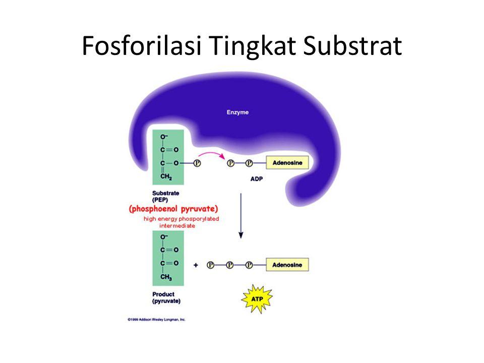 Fosforilasi Tingkat Substrat