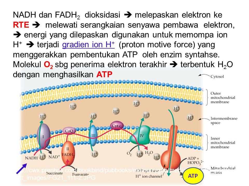 Komponen RTE http://cwx.prenhall.com/bookbind/pubbooks/mcmurrygob/medialib/media_portfolio/ text_images/FG21_111-2.JPG NADH dan FADH 2 dioksidasi  me
