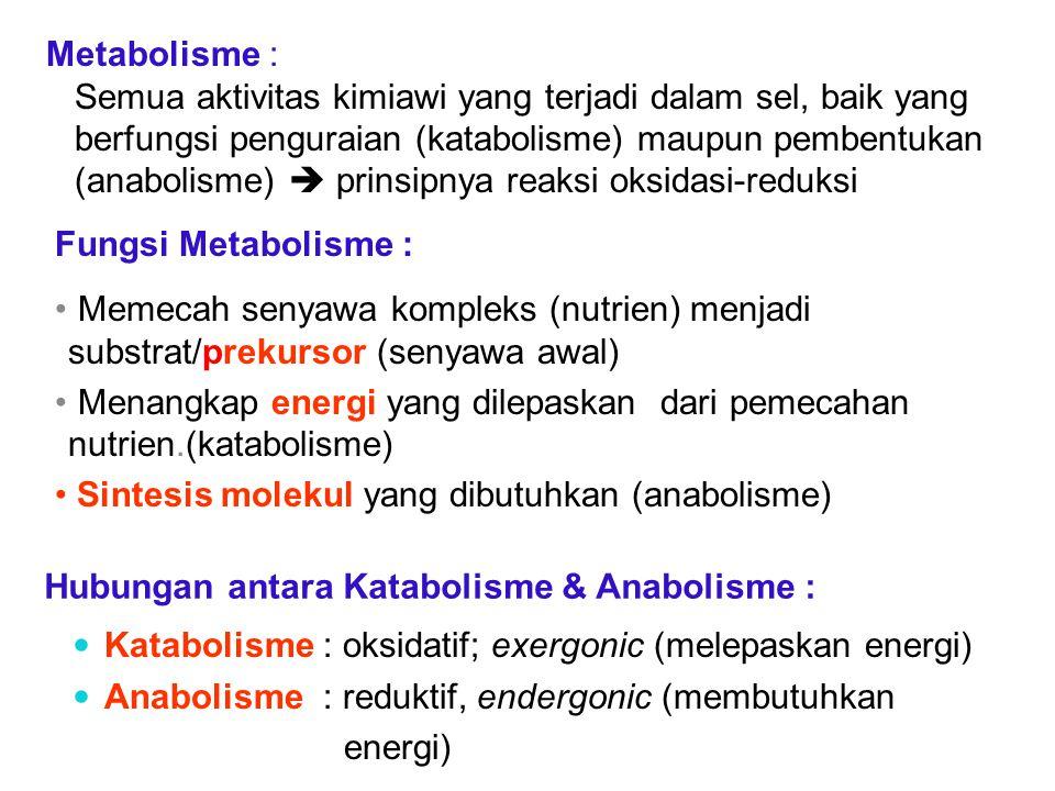 Fungsi Metabolisme : Memecah senyawa kompleks (nutrien) menjadi substrat/prekursor (senyawa awal) Menangkap energi yang dilepaskan dari pemecahan nutr