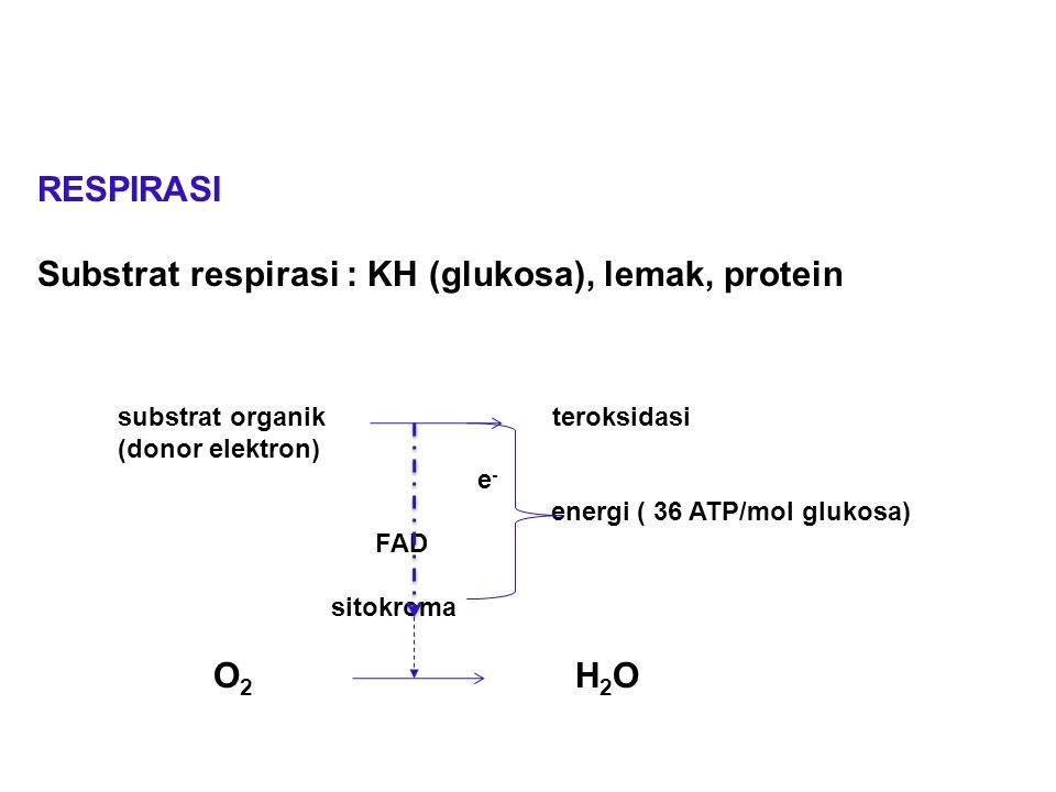RESPIRASI Substrat respirasi : KH (glukosa), lemak, protein substrat organik teroksidasi (donor elektron) e - energi ( 36 ATP/mol glukosa) FAD sitokro