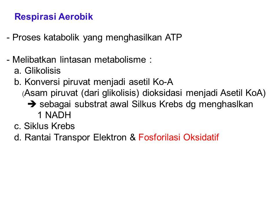 - Proses katabolik yang menghasilkan ATP - Melibatkan lintasan metabolisme : a. Glikolisis b. Konversi piruvat menjadi asetil Ko-A ( Asam piruvat (dar