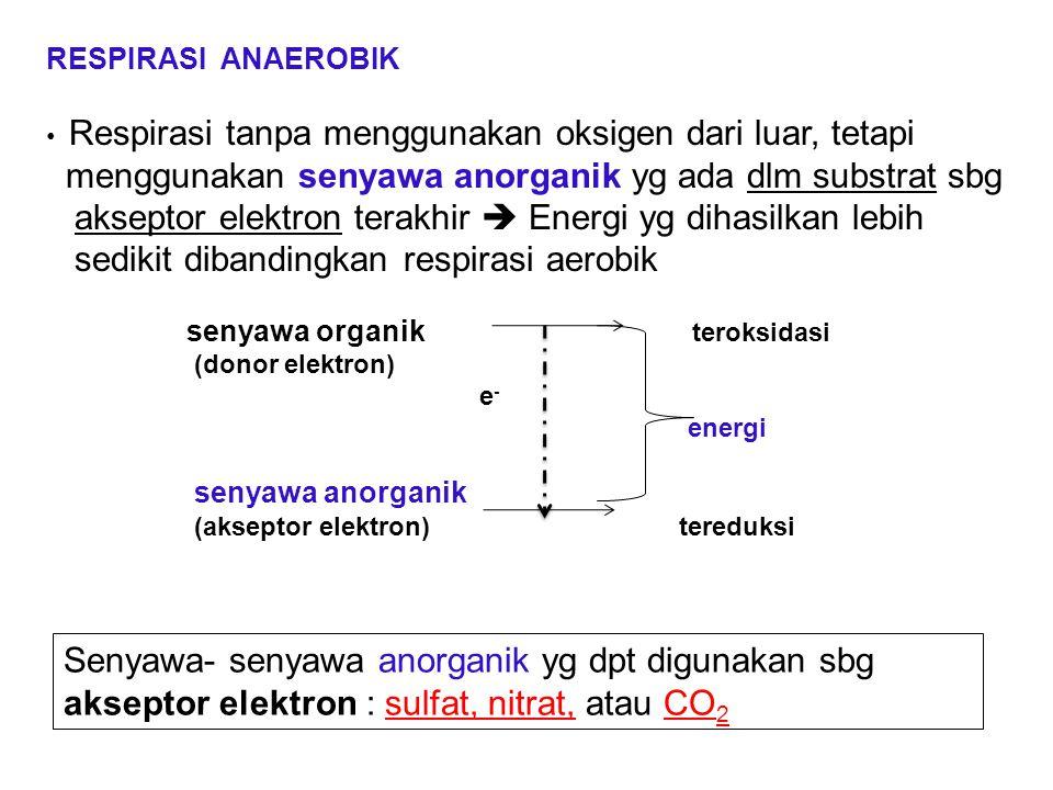 RESPIRASI ANAEROBIK Respirasi tanpa menggunakan oksigen dari luar, tetapi menggunakan senyawa anorganik yg ada dlm substrat sbg akseptor elektron tera